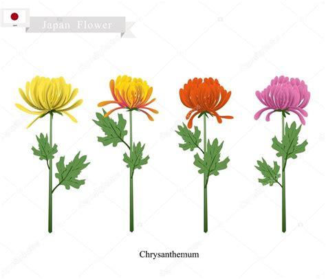 fiore simbolo della famiglia fiori di crisantemo il fiore nazionale giappone
