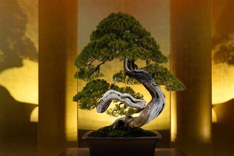 bonsai da interno il successo dei bonsai da interno arrediamo net
