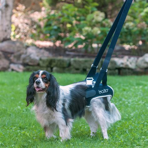 rear lift harness balto rear lift harness balto up lifting walking harnesses zoomadog the dogs