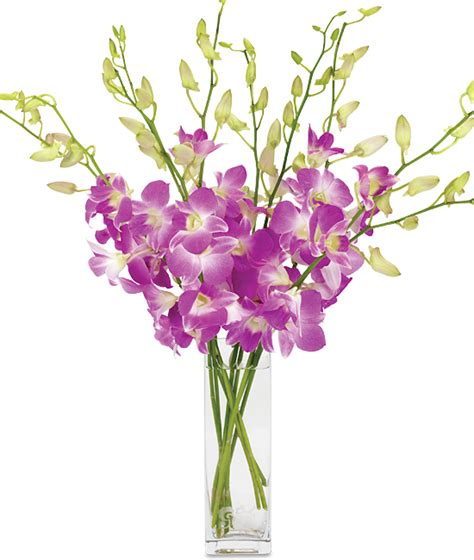 orchid delivery monthly orchid delivery year of orchids calyx flowers
