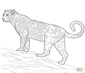 Jaguar Big Cat Coloring Page Free Printable Coloring Pages Coloring Pages Jaguar