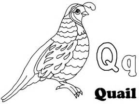 Alphabet Q Is For Quail Coloring Page  Color Luna sketch template