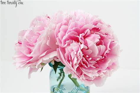 pink peonies another peony update 2014