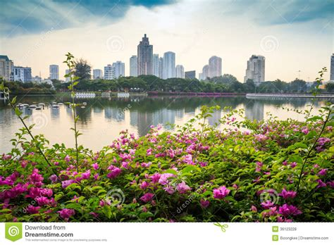 bright as day l flowers in city cr2 stock photo image of blue thailand