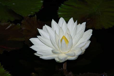 lotu s lotos altes 196 gypten