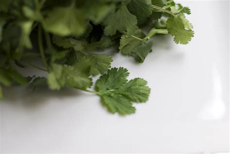 Is Dried Cilantro For Detox by Back To Organic Cilantro