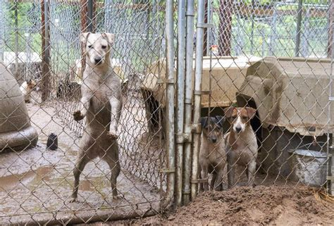 aspca puppy mills 17 best images about aspca on cats federal and pets
