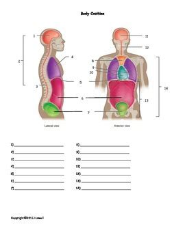 cavities diagram quiz cavities quiz or worksheet by everything science and