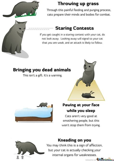 how to tell a is how to tell if your cat is plotting to kill you by e v a n meme center