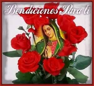 imagenes de rosas rosas hermosas imagenes hermosas de rosas rojas con frases imagenes de rosa