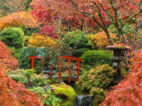 Japanese Maple Garden by Growing Japanese Maples Australian Handyman Magazine