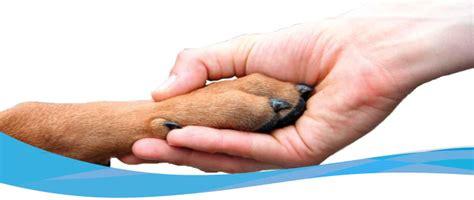 euthanasia cost low cost pet euthanasia wordscat