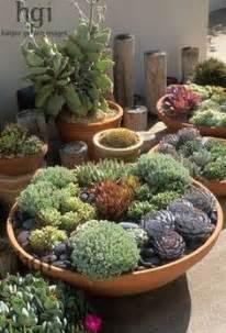 1000 images about succulent bowls on