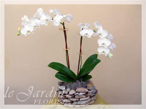 Unique Flower Vase Double Stem Imperial Orchids Arrangement In Le Jardin