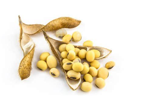 alimenti per aumentare il progesterone alimenti ricchi di estrogeni per aumentare il 28