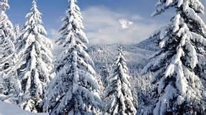 snow in the pines desktop background hd 1920x1080 deskbg com