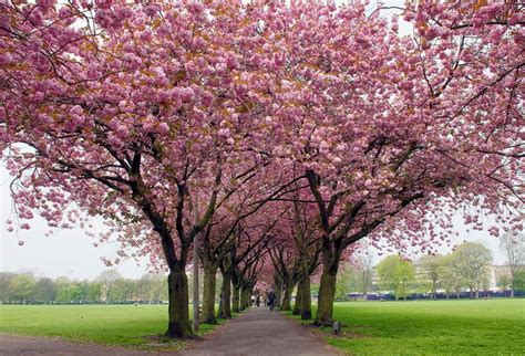 value 9 cherry tree park edinburgh columbus ohio pictures is only 9 weeks away speaking of i trust believe