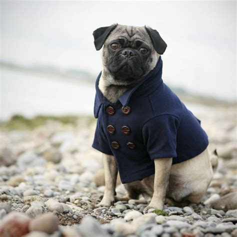 for pugs pug the of animals