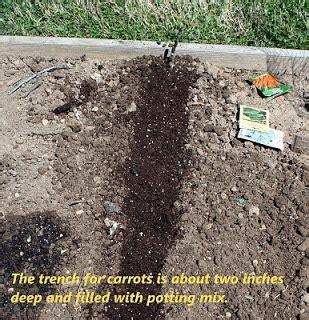 danos garden planting carrot seed