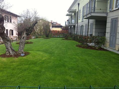 giardini con ulivi giardini privati pavia andrea bariani giardini
