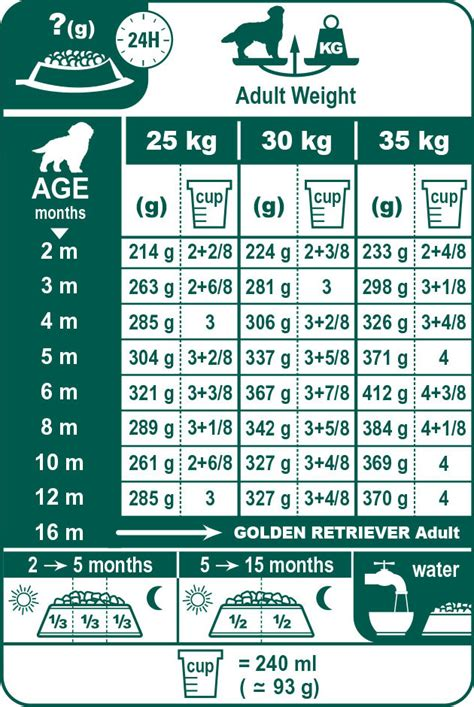 golden retriever food guide golden retriever junior food royal canin 174