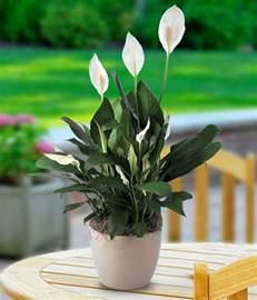 Unique Gifts Home Decor a peace lily planter beneva com