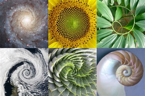 Golden Section In Nature by The Golden Ratio A Brief Introduction Totem Learning