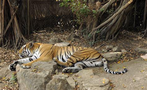 fotos animales zoo zool 243 gico el pantanal bienvenidos a guayaquil sitio web