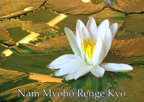 nam myoho renge kyo testo www sintonia a luz br o significado de nam myoho