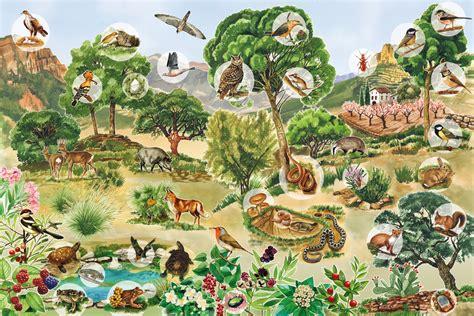 imagenes de recursos naturales vivos ecosistema dibujo imagui