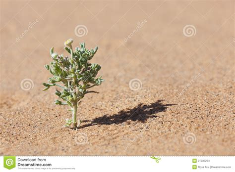 tiny plant desert plant in sand with tiny yellow flower stock images