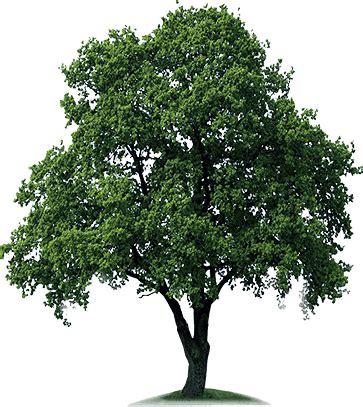 image of tree plant a tree sath