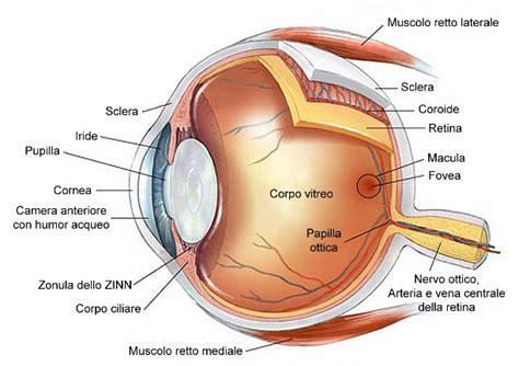 occhio interno ortottica ed assistenza oftalmologica ortottica ed