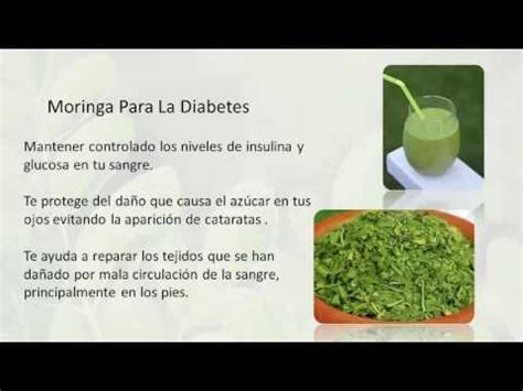 video de la planta de moringa youtube propiedades curativas de la moringa youtube