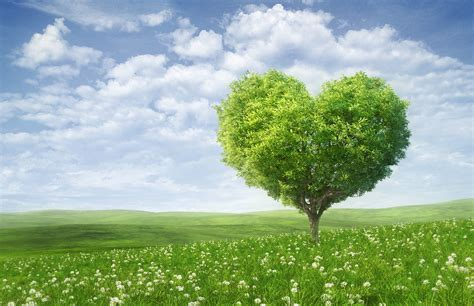 wallpaper green tree hd wallpaper love heart tree green landscape hd 4k love