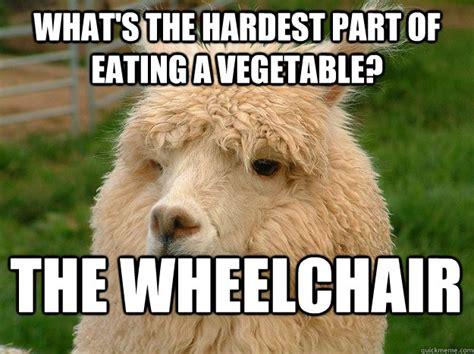 Tasteless Memes - tasteless alpaca memes quickmeme