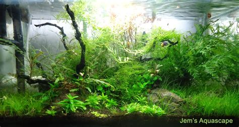 jems aquascape jasa design  maintenance aquascape