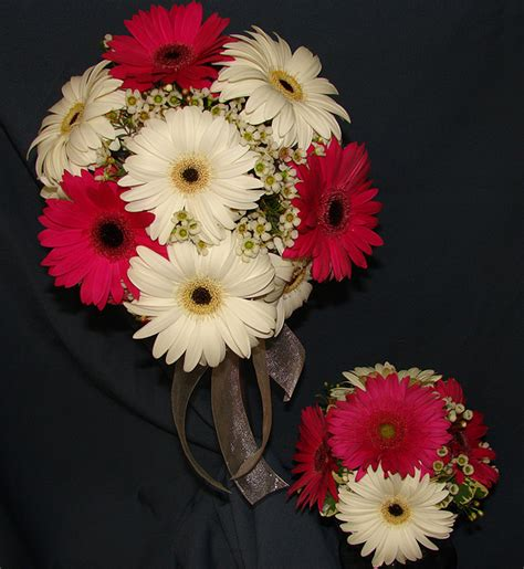 Ideas For Gerbera Flowers Best 25 Gerbera Wedding Ideas On Pinterest Gerbera Wedding Flower Photos Gerbera