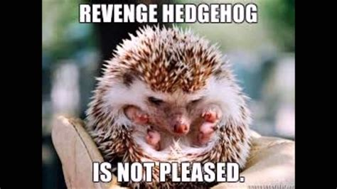 Hedgehog Meme - top 10 cute hedgehog pictures or memes youtube