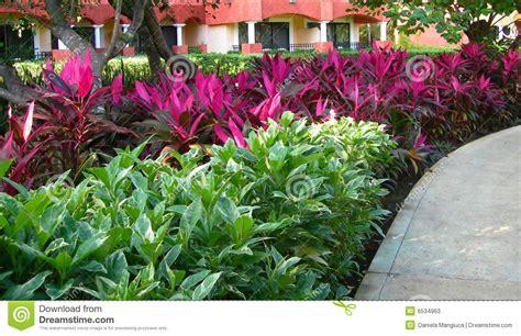 lush tropical foliage landscape stock image image 6534963