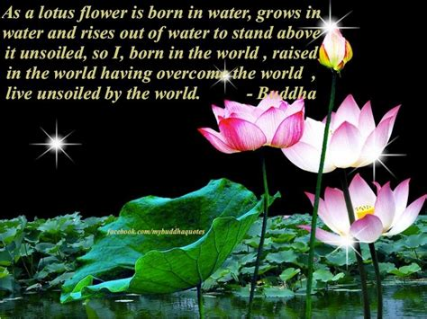 born raised meaning buddha s dharma as a lotus flower is born in water