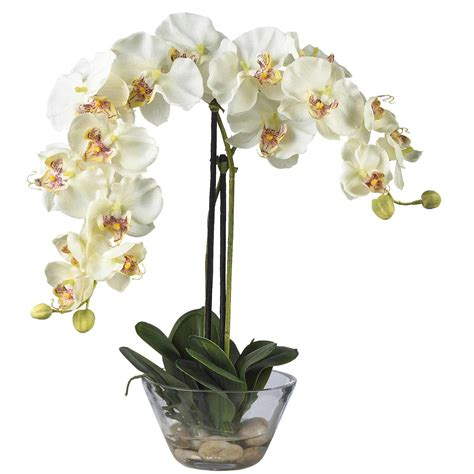 Orchid In Glass Vase by Phalaenopsis Orchid With Glass Vase 4643 Nearly
