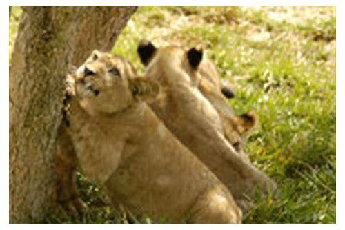Flesch scales zip download garras de leon animoto download fandeluxe Images