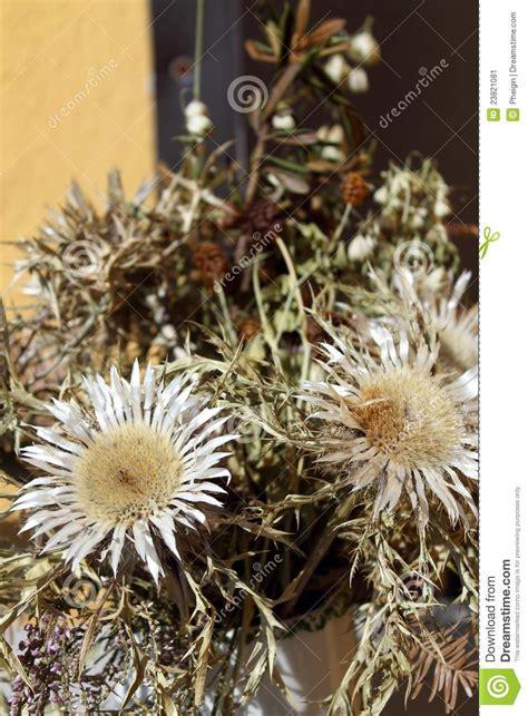 composizione fiori secchi prezzi composizione dei fiori secchi montagna immagine stock