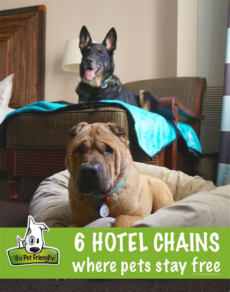 motels that allow dogs pet friendly hotel chains where pets stay free take paws the official pet travel