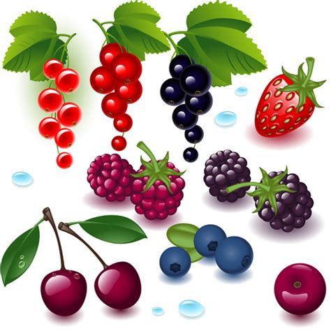 realistic fruits and berry design vector 01 vector food free