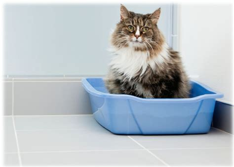 7 Tips For Solving Litter Box Problems For Older Cats