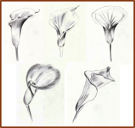 weekly doodles and tuts how to draw a calla lily method 1