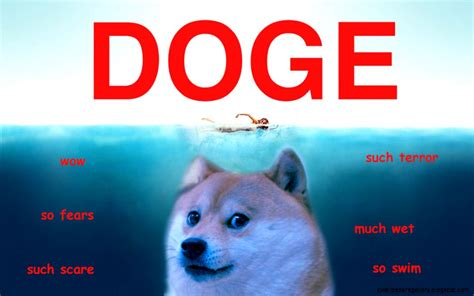 Doge Meme Pictures - the gallery for gt doge shiba wallpaper