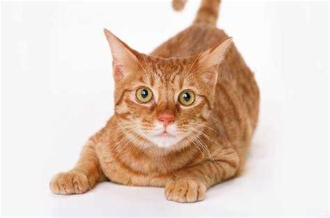 alimentazione gatta sterilizzata veterinario risponde gatto